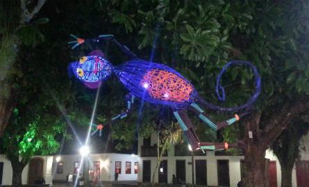 Um lagarto flutua sobre a noite de Paraty. Foto: Ciça Oliver/Agência Biblioo